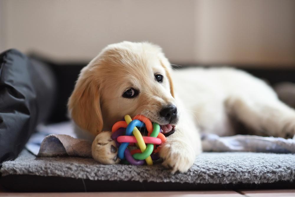 Was Sie von Hunden über Geldanlage lernen können